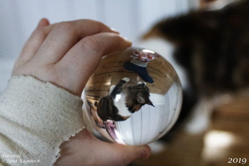 Cats in lensball part 2